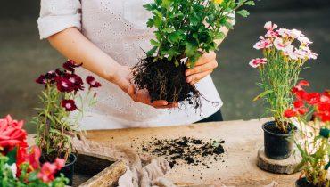 Plantacion y consejos de jardineria