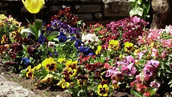 diseño jardin floral