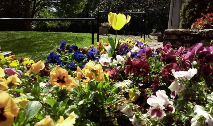 diseños de jardines con flores