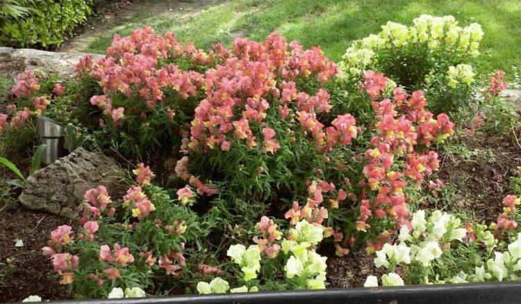 diseño de jardines con flores