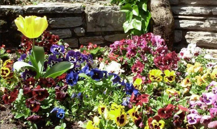 diseño jardin con flores
