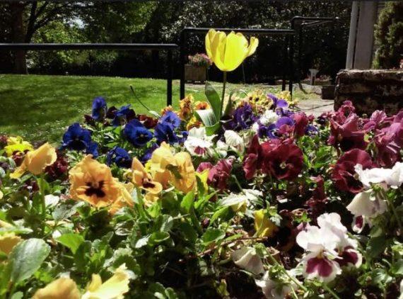 Jardines de flores- Jardineria Loiu