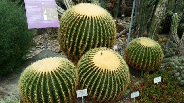 jardin botanico berlin que ver