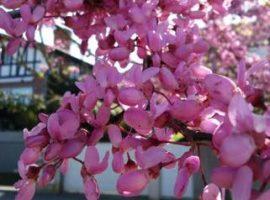 jardineria y diseño de jardines en bizkaia