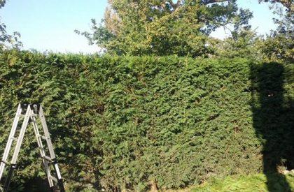 mantenimiento de jardines en loiu, vizcaya