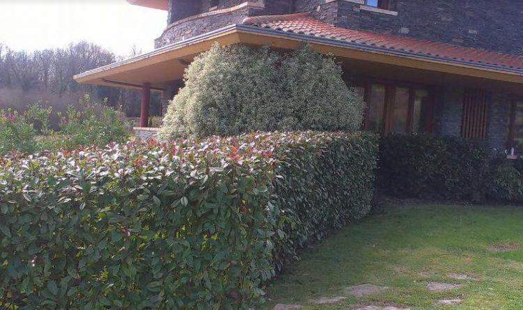 plantacion de seto en bizkaia