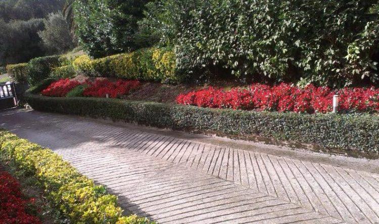 servicios de plantacion en bizkaia