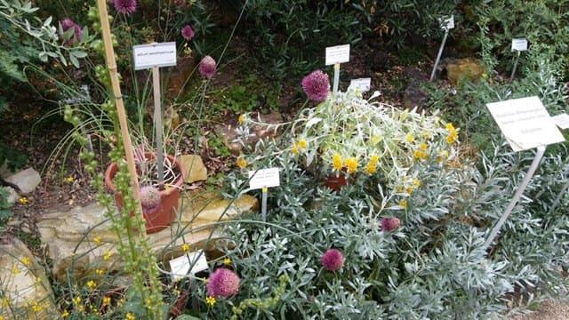 visita jardin botanico en berlin