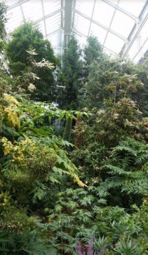 especies variedad jardin botanico berlin