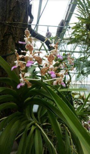 jardin botanico berlin flores