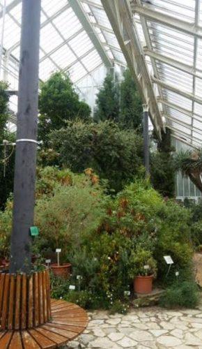 plantas hivernadero jardin botanico