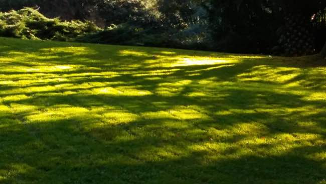 jardineria limpieza parcelas