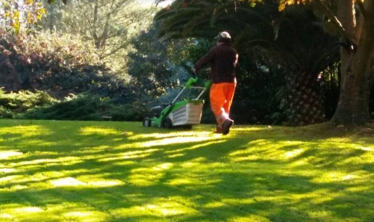 mantenimeinto jardines y limpieza parcela