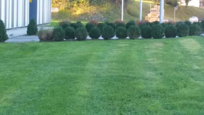 mantenimiento de jardin en bizkaia