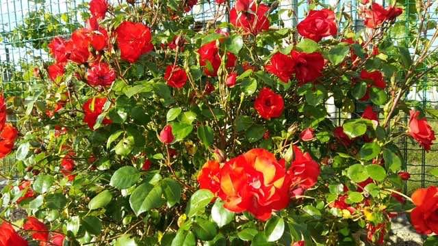 mantenimiento jardin con flores en bizkaia
