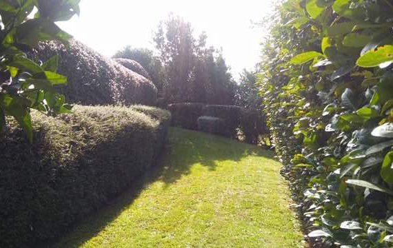 mantenimiento jardin en Bakio