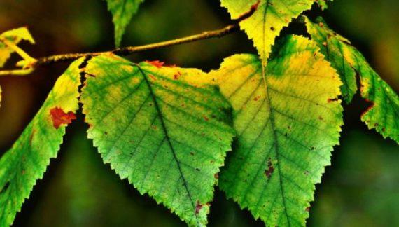 enfermedades y plagas plantas combatir