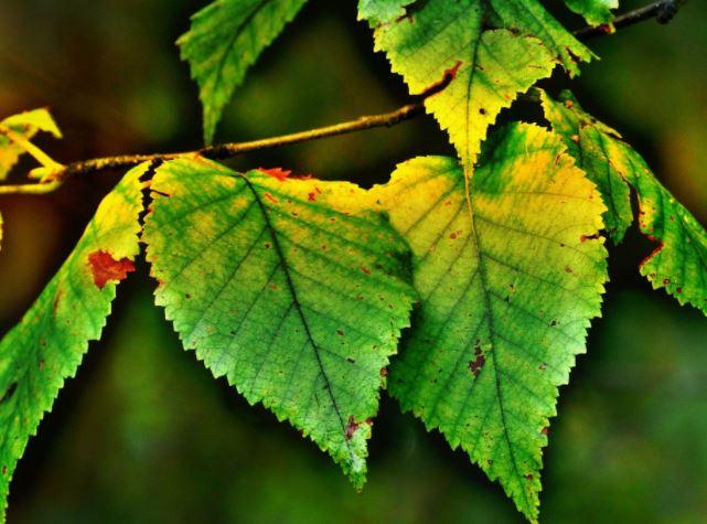 C mo identificar y combatir plagas y enfermedades en las - Enfermedades de las plantas de interior ...
