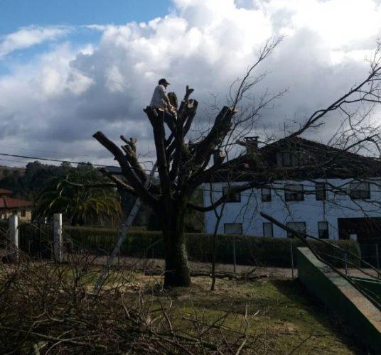 El invierno la poca perfecta para la poda de robles - Poda de hortensias epoca ...