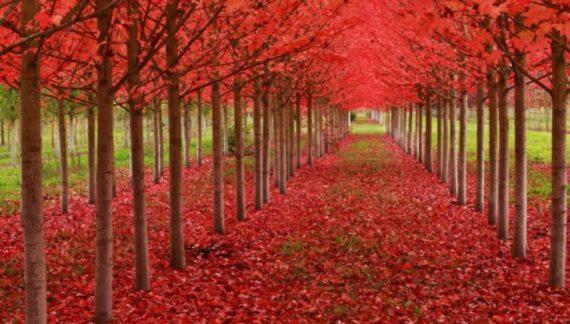 tuneles de arboles mas bonitos del mundo