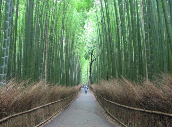 Bosque de Arashiyama Kyoto