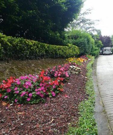 jardineria mungia construccion de jardin entrada vivienda