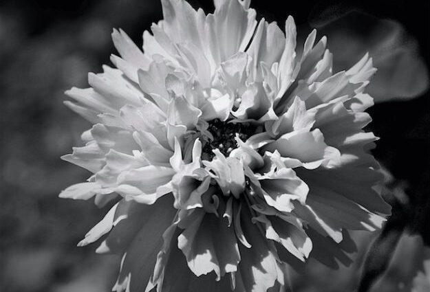 echinacea plantacion en vizkaya