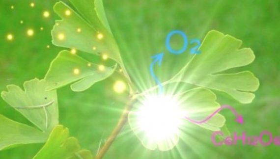 co2 plantas absorcion