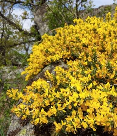 arbustos en peligro de extincion