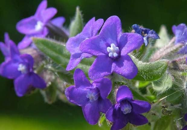 plantas en peligro de extincion pais vasco