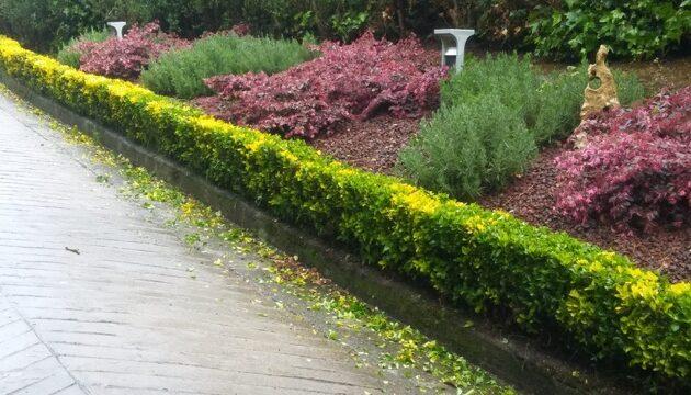 acondicionamiento de jardin en bizkaia
