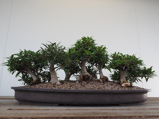 bonsai arbol tipico jardines minimalistas