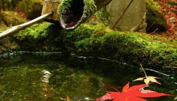 jardines japoneses diseños y tipos