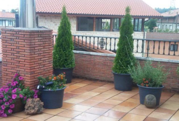 jardineria para deorar terrazas
