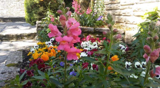 flores anuales para decorar jardin