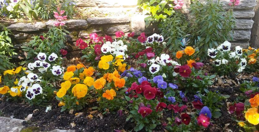 flores de temporada para decirar tu jardin