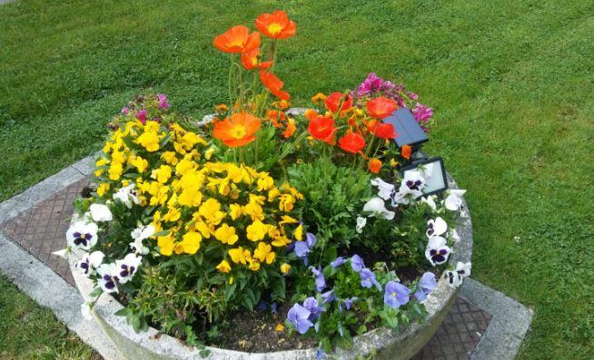 pensamientos y flores de temporada exterior