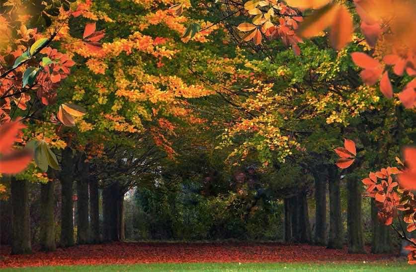 caida de las hojas durante el otono