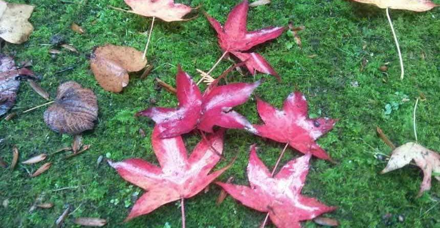 cambio color hojas durante otono