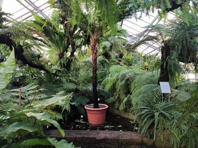 botanico postdam alemania