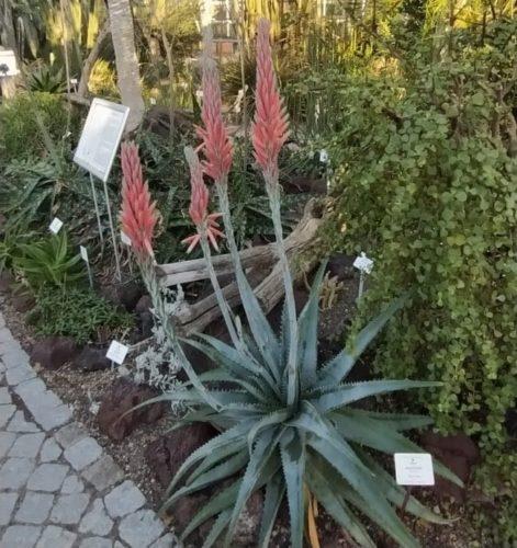 botanico postdam alemania jardin