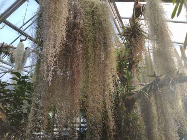jardin botanico postdam invernadero