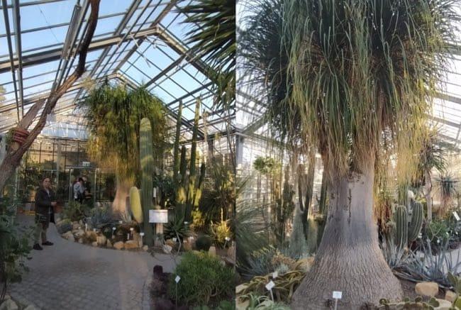 jardn botanico alemania cerca de berlin
