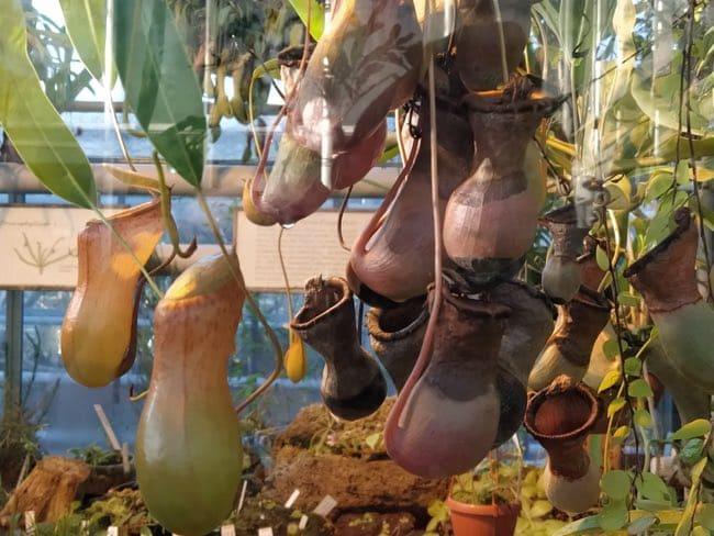 plantas del botanico de postdam