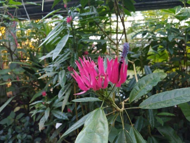 visitar el jardin botanico de postdam