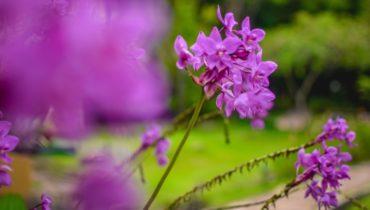 orquideas silvestres del pais vasco