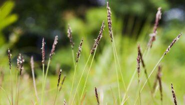 plantas resistentes a la salinidad