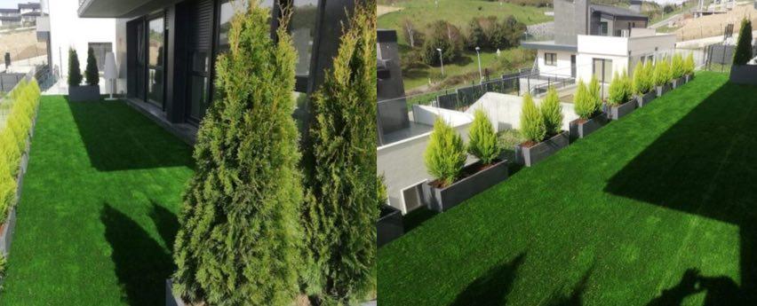 terrazas con coniferas
