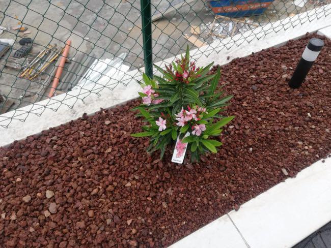 especies florales para jardines cerca del mar