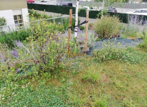 mejora jardin en Algorta el antes